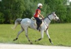 June 22nd 2013: EXTRAORDINARY PERFORMANCE FOR ALTA GRACIA IN THE CEI***160km - Arabian Horses
