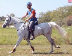 July 22nd - NEW GALLERY OF PHOTOS - MISCELLENEOUS - Arabian Horses