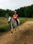 Sept 7th 2014 Capriata d'Orba - Arabian Horses